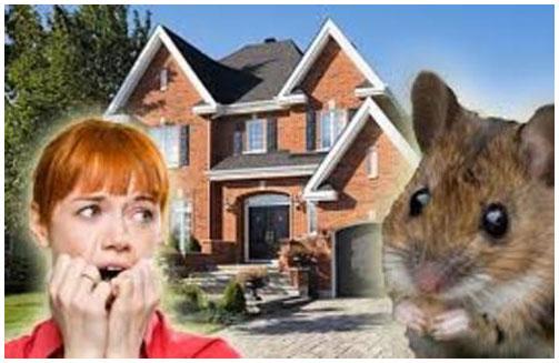 Mice in home